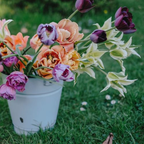 Produkt Impression Tulpen