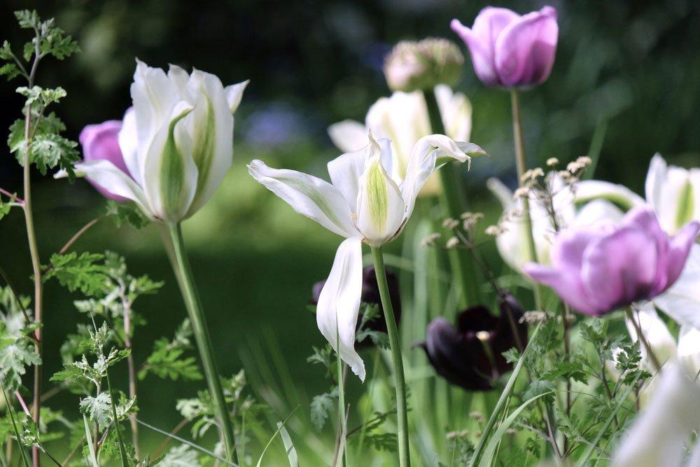 Journal Beitrag mit Tulpen gestalten 2