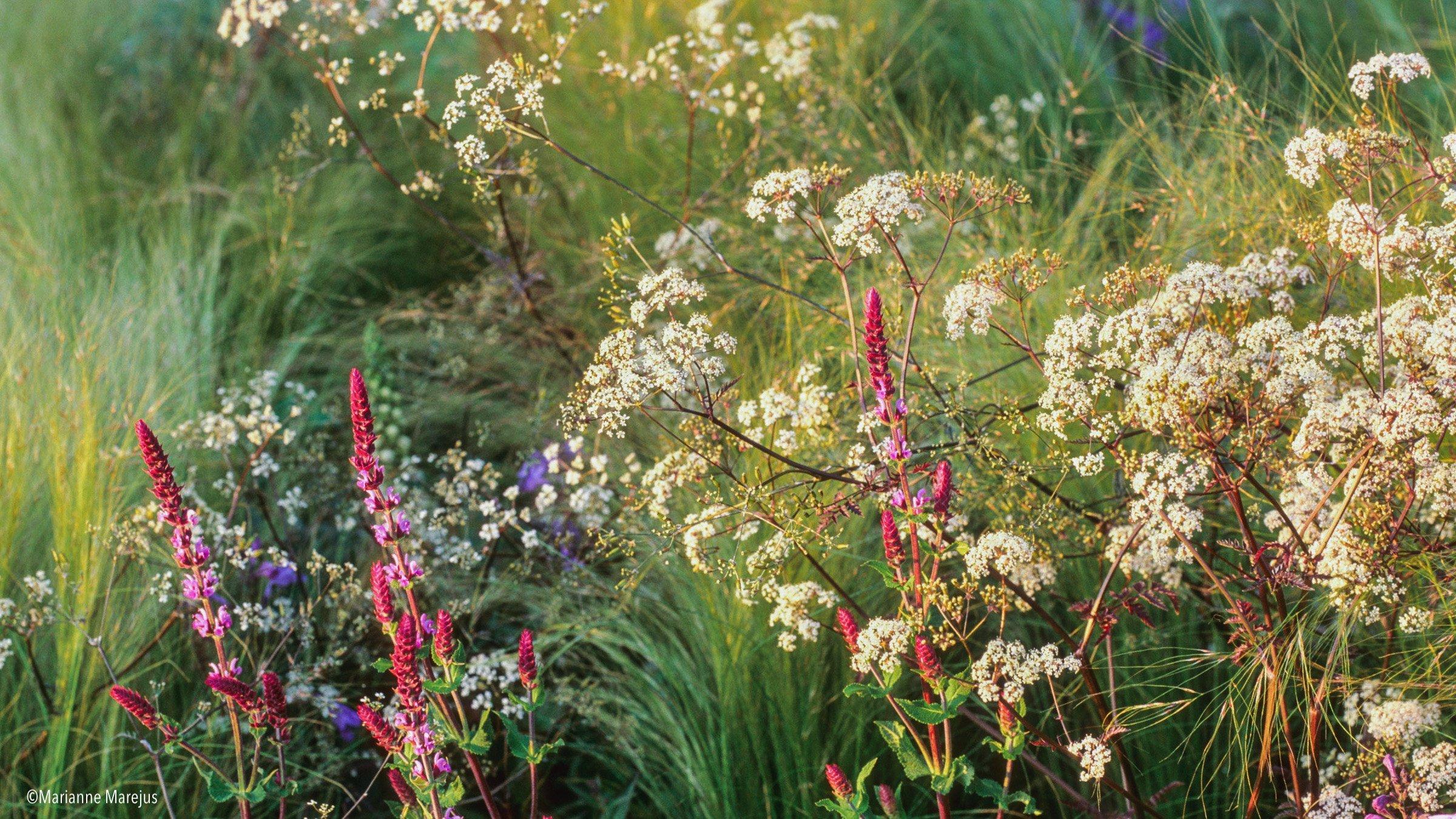 Blühender Staudengarten im Sommer
